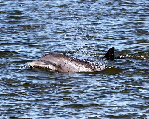We happened upon this dolphin who seemed very interested in checking us out.  We hope he likes what he sees!!