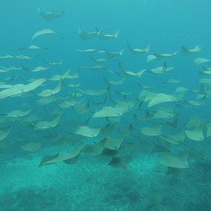 Under water , Isla del Caño