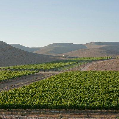 Nana vineyard