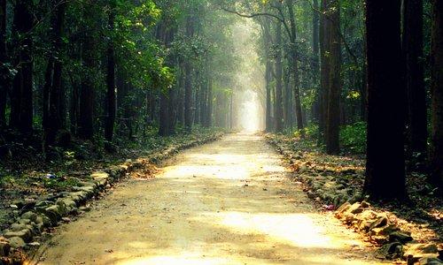 Sitabani forest, Jim Corbett National Park