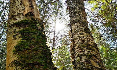 There is so much variety of trees, birds and geography at Ken Reid Conservation Area. It has something for everyone.
