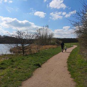 Willesley Wood
