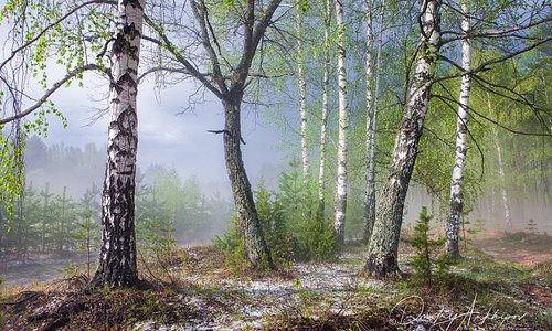 Весенний туман.