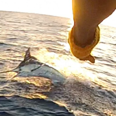 Nice photo shared by one of our guests catching their first Marlin!