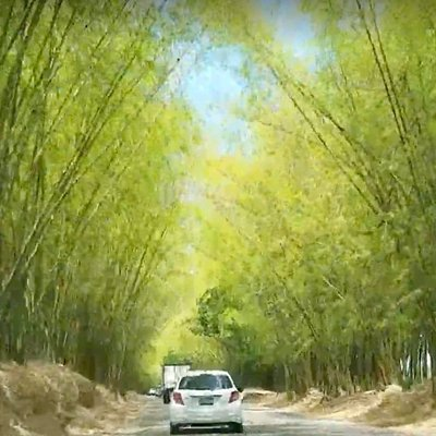 Driving through Holland Bamboo- admiring the beauty!