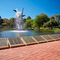 Burswood Park is home to seven lakes, scattered throughout the parkland for visitors to enjoy.  The lakes provide homes and shelter for our birds and other fauna, as well as act as irrigation and drainage basins for the park.  As such, there is no swimming or canoeing permitted.