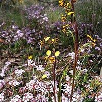 Wax Garden Conservation Reserve