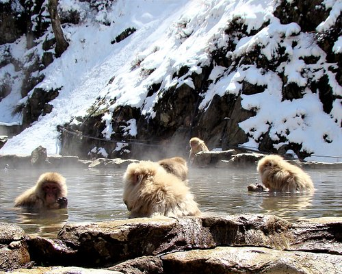 special occasion watching the snow monkeys