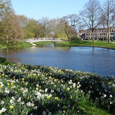 Plantsoen te Leiden; een 19de eeuws stadspark uit de jaren 1834-1835;monumentale oude bomen en bloeiende narcissen april 2019