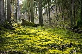 forêt du morvan