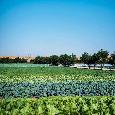 Enjoy the colorful fields at Emirates bio Farm.