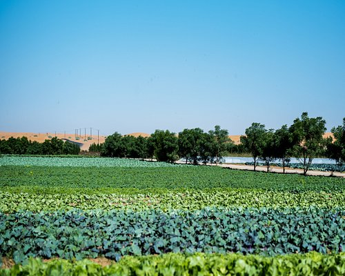 Enjoy the colorful fields at Emirates bio Farm.