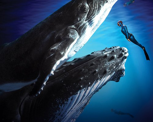 Fearless wanderers, enchantment hunters and virtual explorers, get closer to the inspiration of our blue ocean in our new VR Experience, Swimming with Humpbacks.