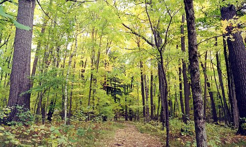 Beautiful trails to walk.