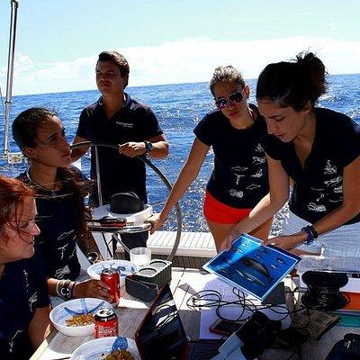 Seguimiento de mamíferos marinos en la zona SW de Tenerife, Zona de Especial Conservación dentro de la Red Natura 2000, disponemos de un hidrófono a bordo. Estudiamos el comportamiento, clases de edad y estructura de grupos. Calderón tropical y delfin mular residentes.