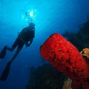 Buceo en Varadero, arrecife, a una profundidad de 20 metros en las Claraboyas.