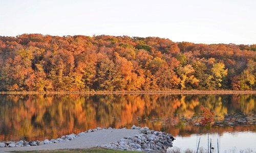 Trees across the lake.