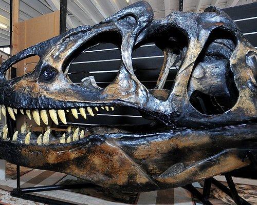 Dinostar's Allosaurus skull