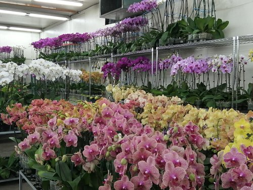 Orchids anyone?
