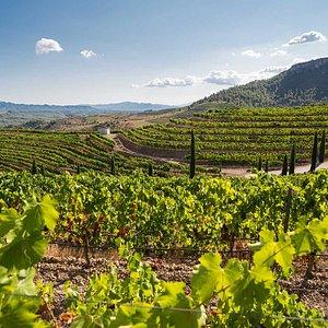 The Wine Region Priorat
