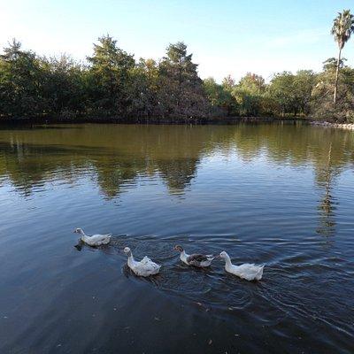 Laguna de los Patos en el Parque Unzué