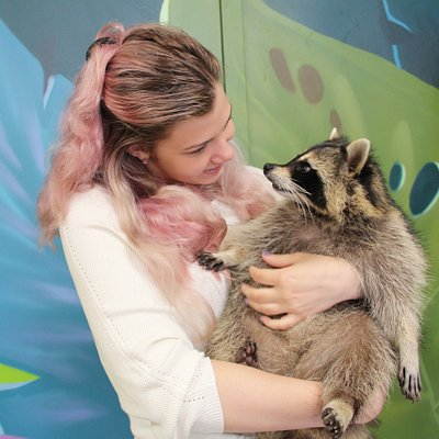 raccoons love