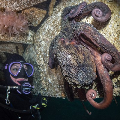 Giant Pacific Octopus at Singing Sands