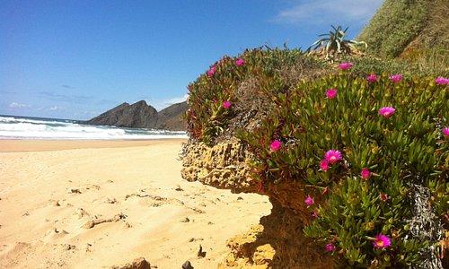 Moje oblíbená pláž na divokém západním pobřeží Algarve. Nejkrásnější je právě nyní, na jaře. Nenechte si ujít ani procházku po útesech nad pláží a v písečných dunách. Užijete si okouzlující výhledy na Atlantik uprostřed neporušené, barevně kvetoucí přírody.