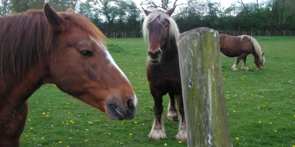 l'environnement de notre gite  c'est les chevaux et chevreuils sauvage et 800  Ha de  foret