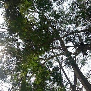 Pohon rindang yang mengelilingi jogging track