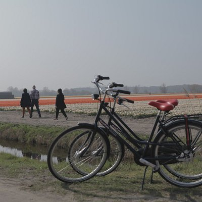 Cycling through the bulb region