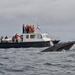 "Whale watching tour boat M.V. ""Blasket Princess"" alongside humpback whale in Dingle Bay"