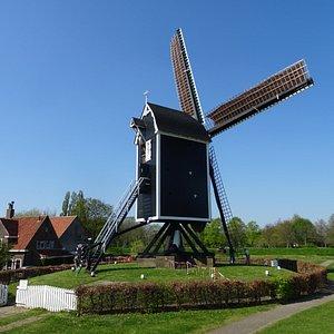 molen het vliegend hert te brielle;reconstructie van een molen uit 1696-1882