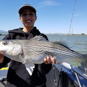 Striped Bass in the Bay