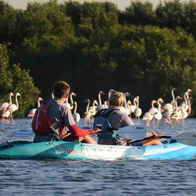 Try our fully guided Mangrove Kayak Nature Tours into the stunning Al Zorah Nature Reserve. Home to over 58 species of rare or migratory birds, including the amazing resident flamingo.