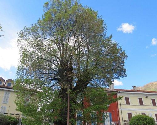 L'olmo secolare in riva al lago da più di 5 secoli....inserito tra gli alberi più rappresentativi d'Italia...