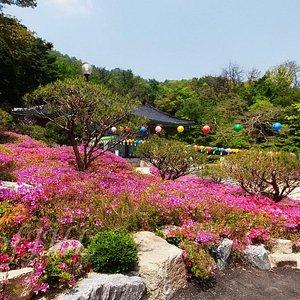Bogwangsa Temple in May