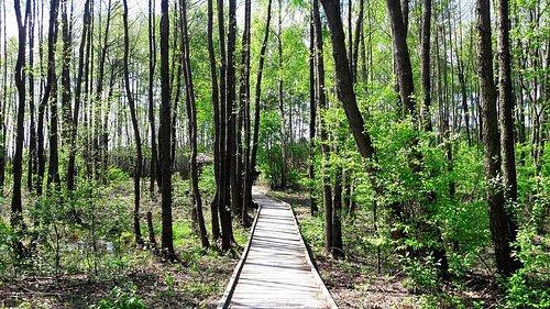 Ścieżka przyrodnicza Czahary