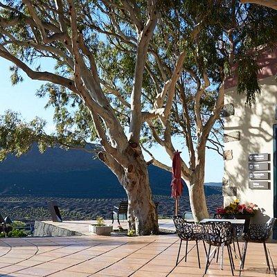 Nachmittags ist die Terrasse ein wunderbarer Platz, um über die Weinberge zu blicken.