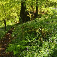 Bowden Woods, St Neot Two Valleys walk