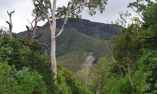 Pictures of Mount Webb, 2hr drive from Cooktown using a dirt road to access. You will cross creeks/rivers to access.