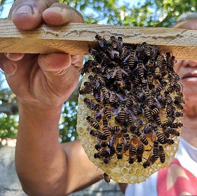 Omoyon Bee Farm