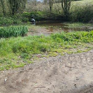 Farm pond on route