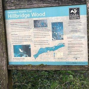 Hillbridge and Park Wood