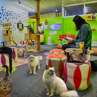 Relax at the Fancy Meow Cat Cafe in Rotorua, New Zealand. Entry includes a drink, free WIFI, massage chair, and plenty of cat cuddles to go around!
