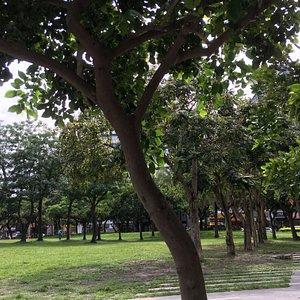 芝生を囲んで樹木がある。