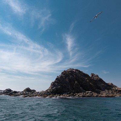 トド岩の向こうに広がる青い空。あ~あの鳥のように空を飛べたら・・・。