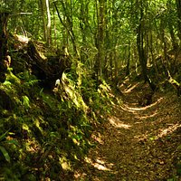 Sunken path through the woodland on the route
