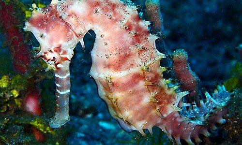 tulamben macro diving