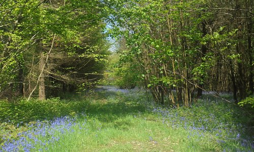 """This is the back drop to the pub. """"Longbeech"""" woods. A fantastic walk before or after a drink and a meal."""